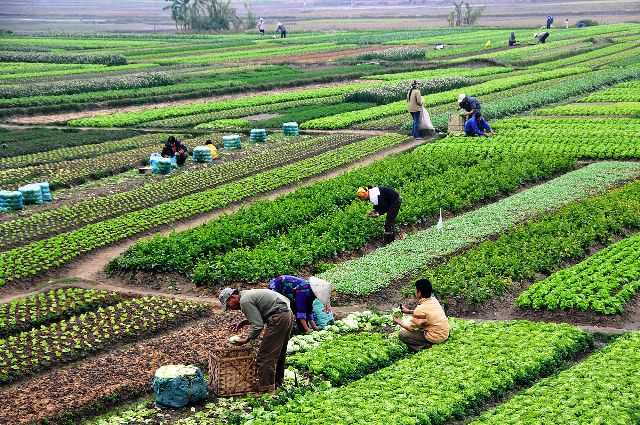 Idei de afaceri în agricultură