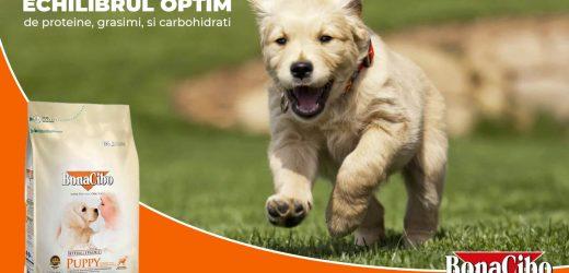 7 Moduri prin care să îngrijești blana câinelui tău – Hrana reprezinta un factor foarte important – Vezi recomandarile!