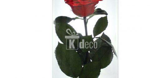 Tipuri de trandafiri pentru gradina dvs